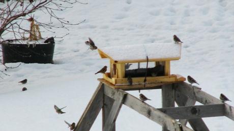 Birds 2_crop