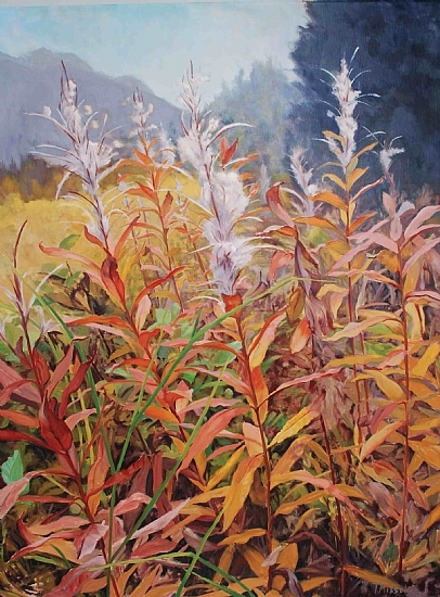 fireweed-cotton